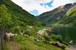 Arnafjorden in Vik i Sogn.