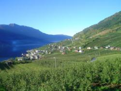 28 Fruit farms in Lofthus.