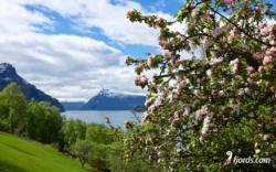 Lustrafjord, Sogn