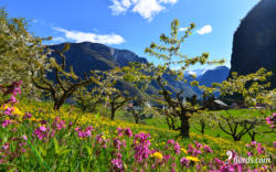 Spring in Undredal