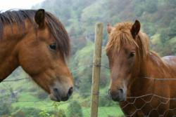 I met these two beauties on the road. Photo: www.fjords.com
