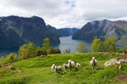 View from the National Tourist Route Aurlandsfjellet. The Aurlandsfjord below. Sogn og Fjordane, Norway.