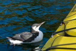 Fjordlife from the kayak on the Oslofjord.
