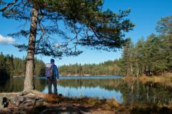Nordmarka Forest
