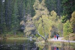 Nordmarka Forest.