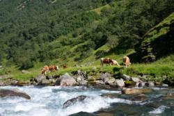 The Undredalsdalen Valley